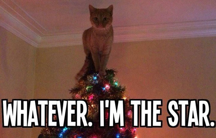 Cat-Wrecks-Christmas-treeff